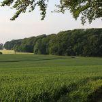 2010-06-13-Landschaft-Diedorf-(16)